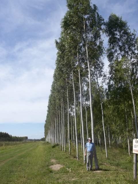 Die ersten Bäume