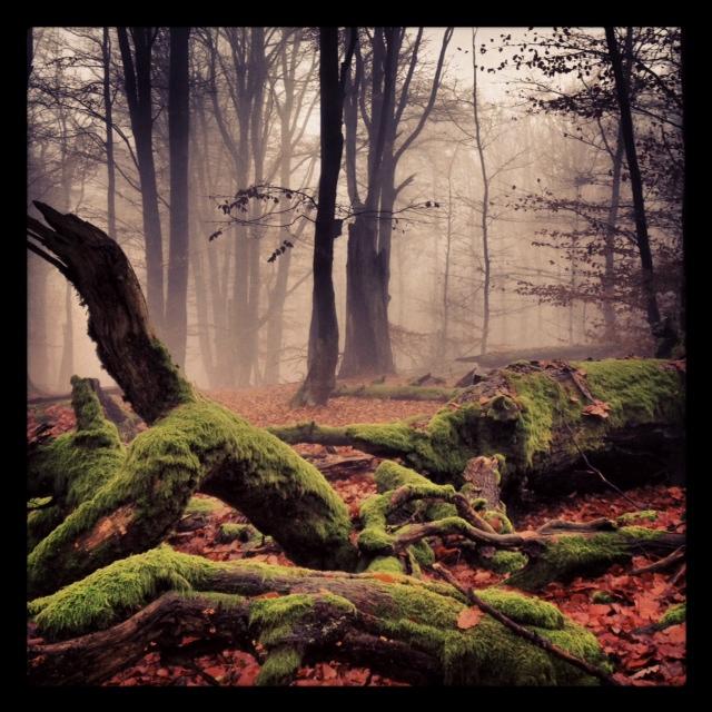 Naturschutzgebiet Rohrberg im Spessart_1